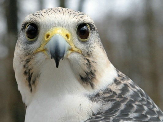 Meet the Birds | Indiana Raptor Center
