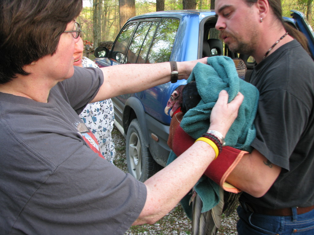 Patti and Markus rescue an injured Turkey Vulture