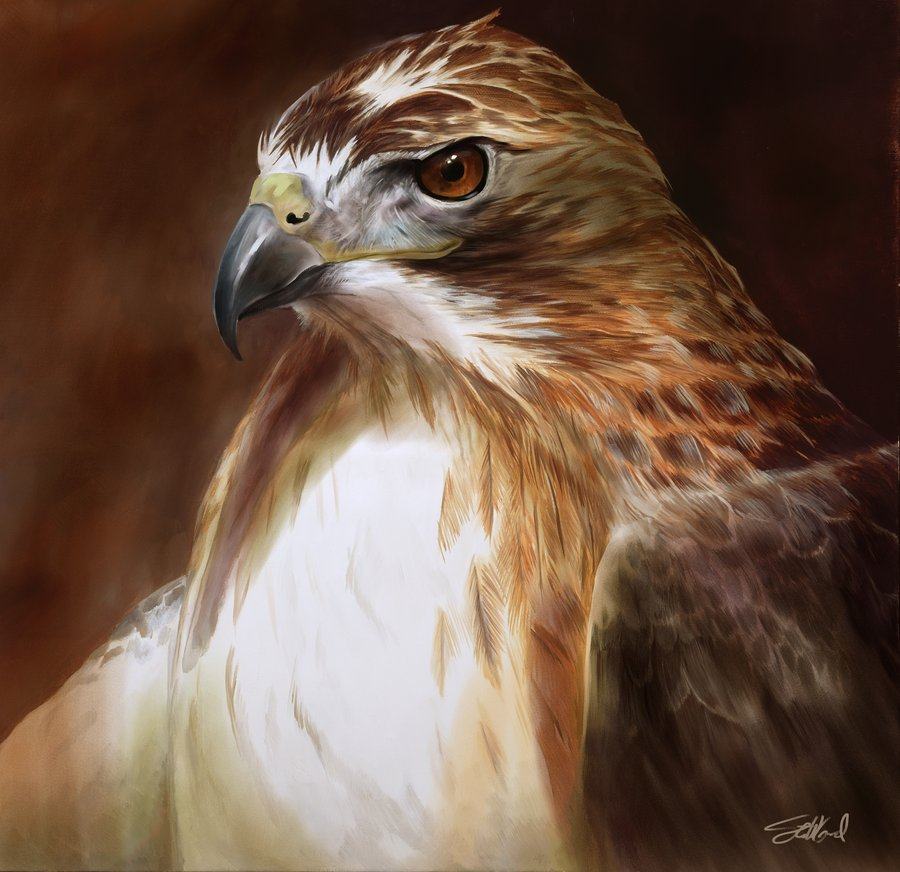 Red-Tailed Hawk by Steve Goad