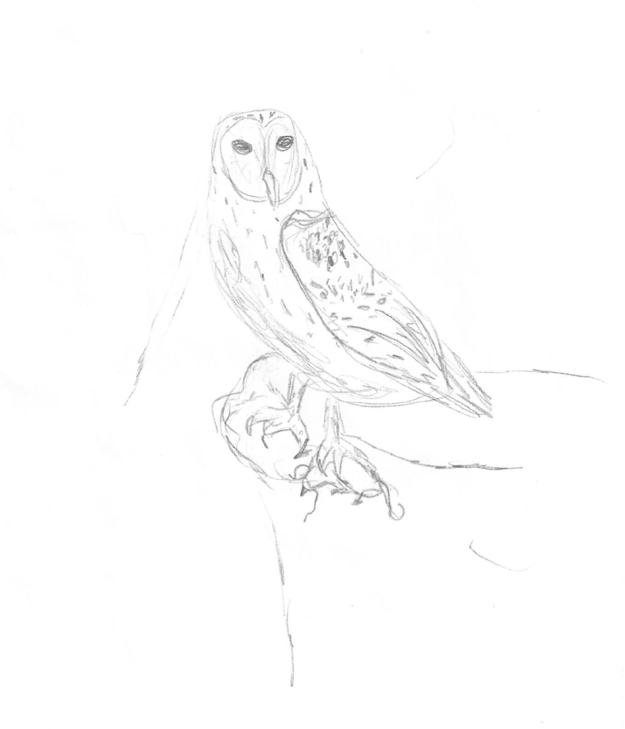 A pencil drawing of a barn owl with a mouse