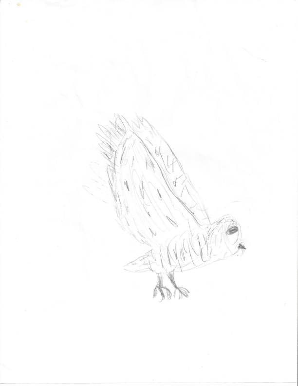 A pencil drawing of a barn owl in flight