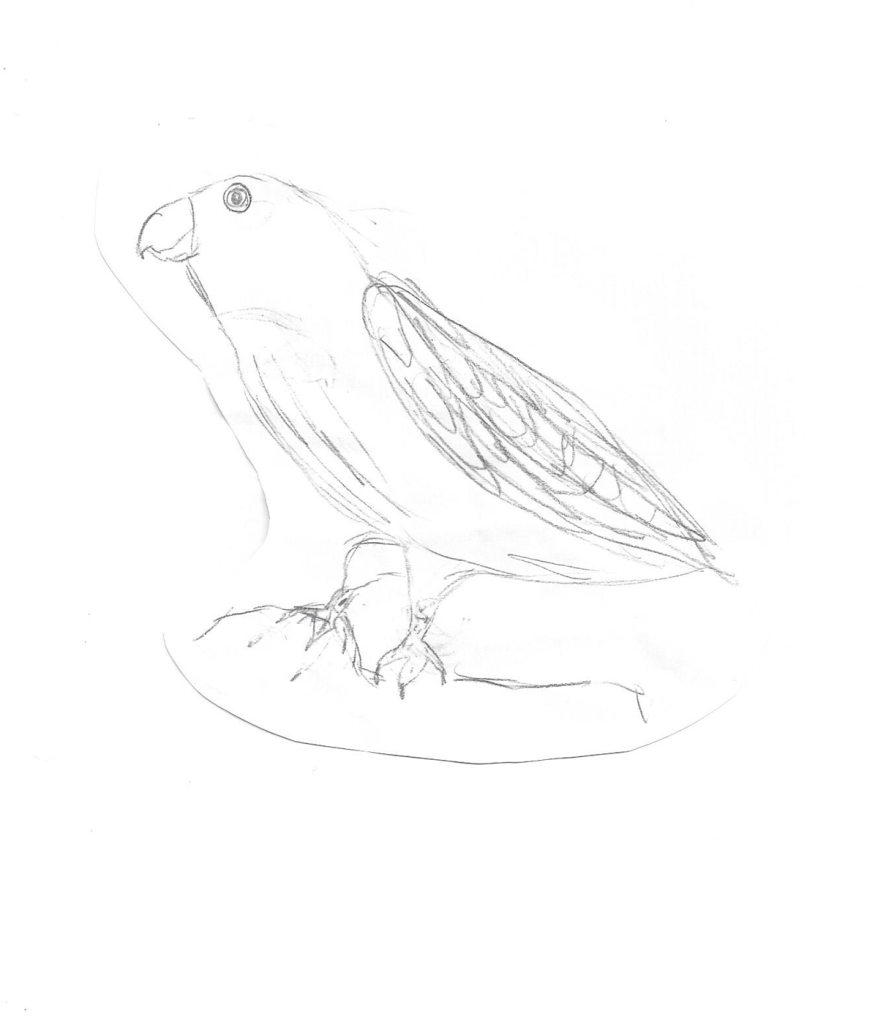 A pencil drawing of a parrot