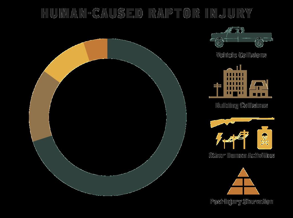 Graph showing causes of injury upon intake to InRC