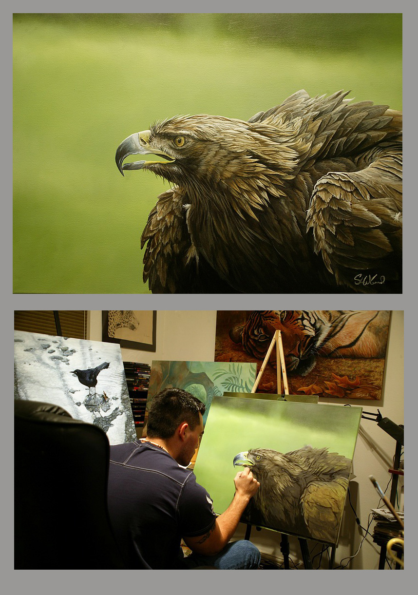Golden Eagle portrait, by Steve Goad